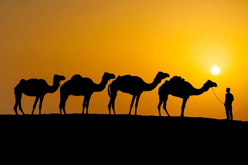 Iran Silk Road Tours by SurfIran